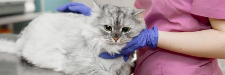 réduire budget vétérinaire chat