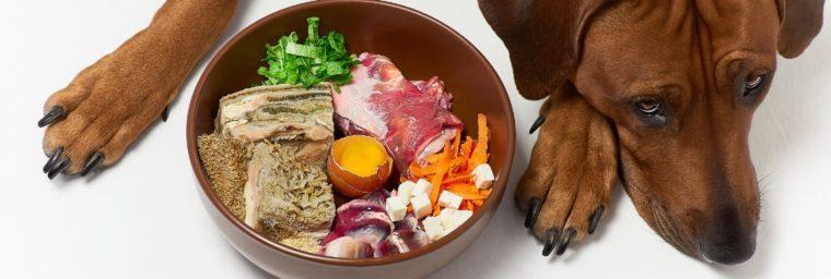 recommandation alimentation maison chien