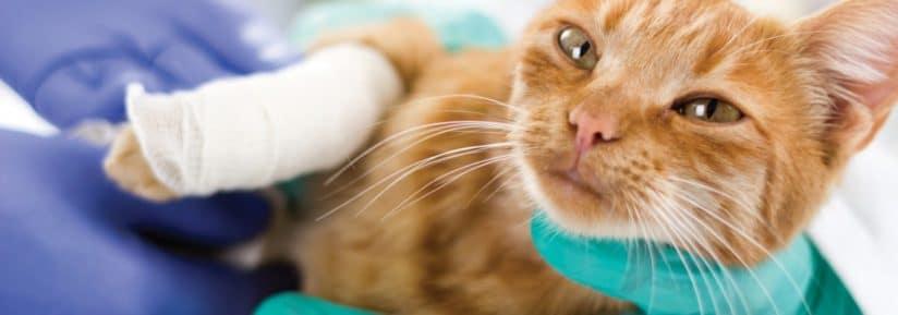 tarif vétérinaire chat patte cassée