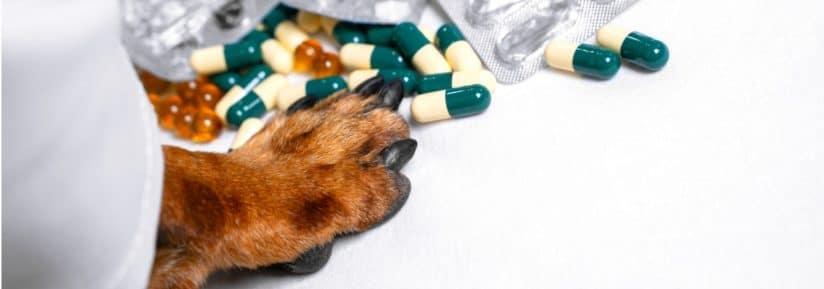 Antibiotiques pour chien