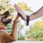 Assurance chien sans engagement