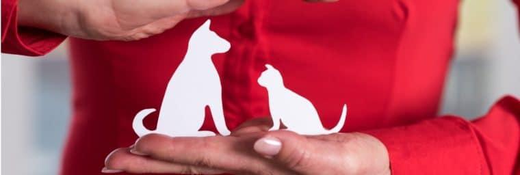 Comparateur assurance animaux