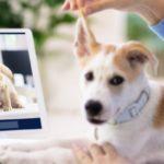 Consultation vétérinaire en ligne