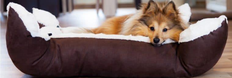 Couchage du chien
