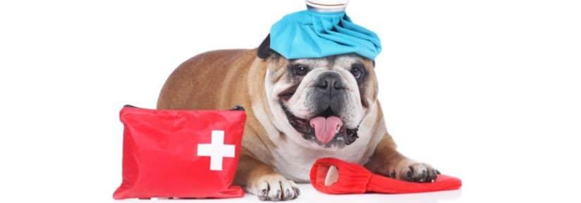Urgences clinique vétérinaire