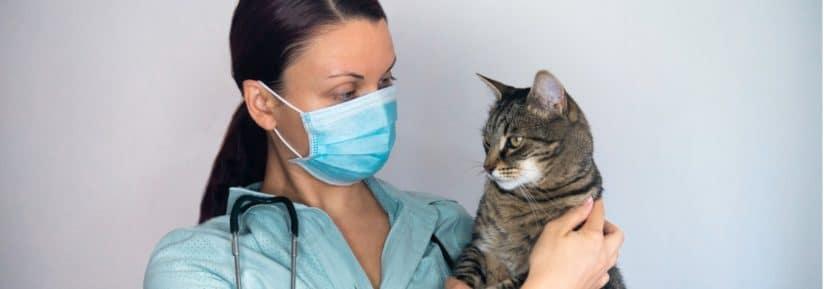 Vétérinaire comportementaliste pour chat