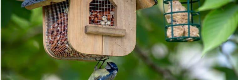 accessoires pour oiseaux