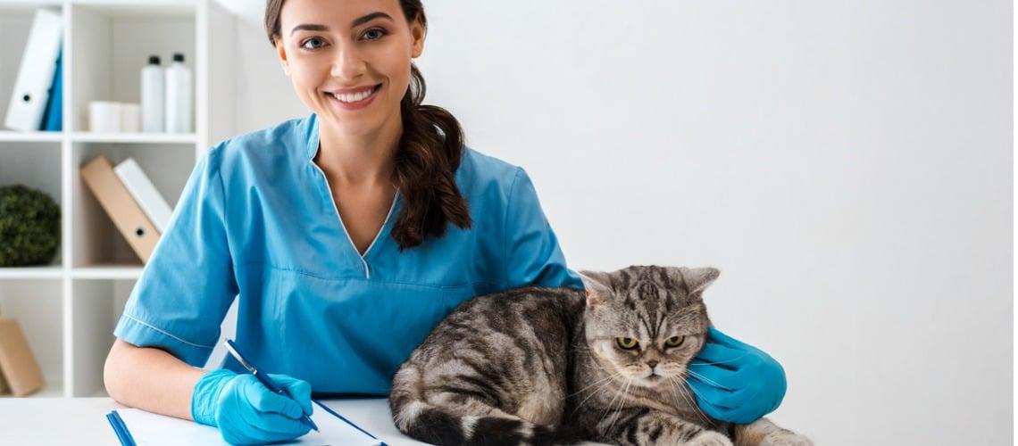 analyse du comportement du chat par un vétérinaire