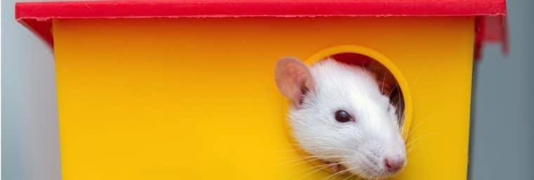 cage à rats domestiques pas cher
