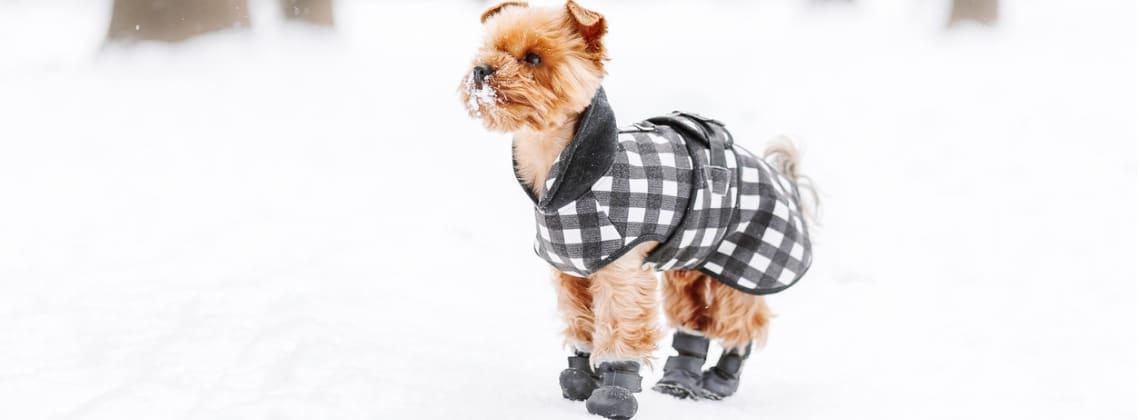chaussure de chien en hiver