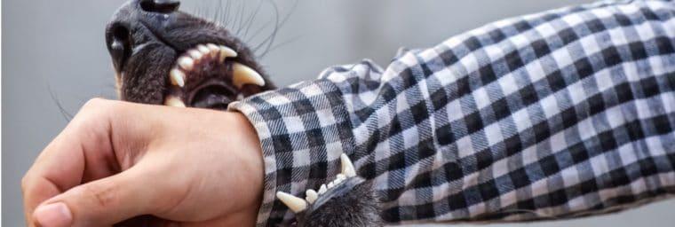 chien comportement agressif