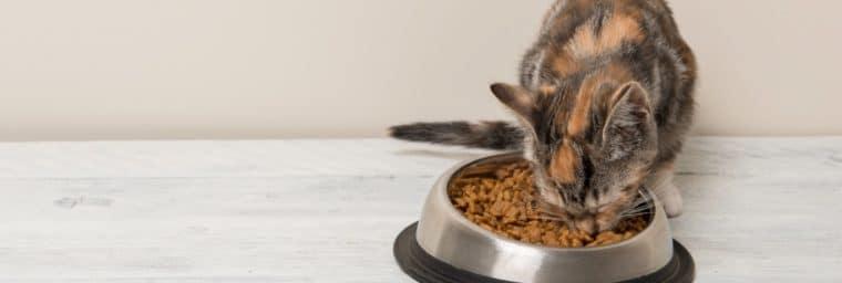 croquette sur mesure pour chat