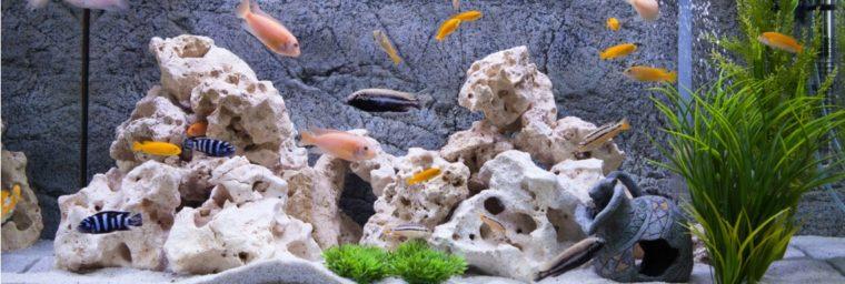 décoration d'aquarium pour poisson