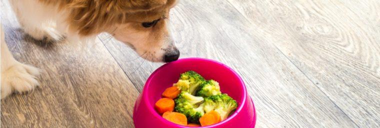 fruits et legumes pour chien