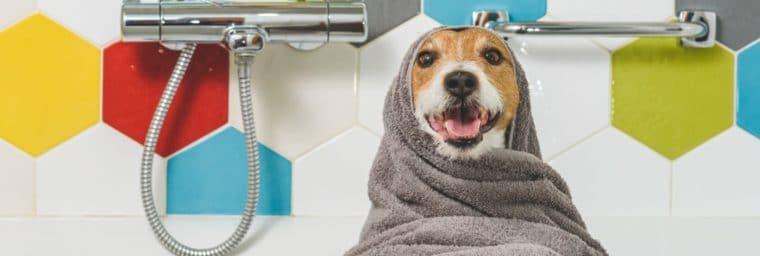 lavage de chiot avec serviette