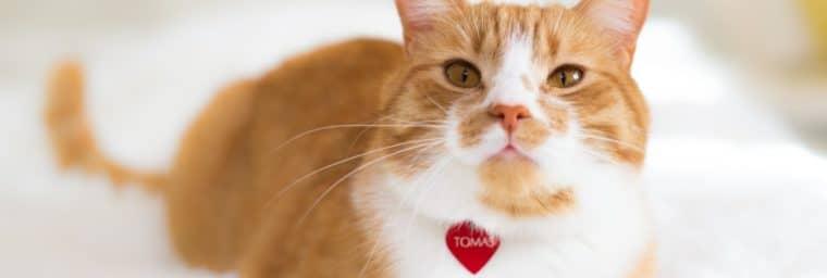 medaille personnalisée pour chat