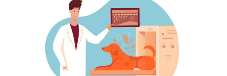 Le prix d'un scanner pour chien