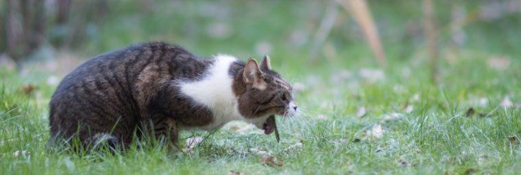 purge d'un chat