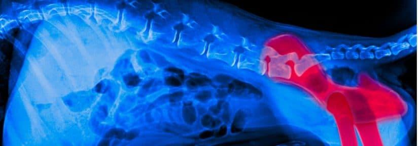 tarif IRM chien
