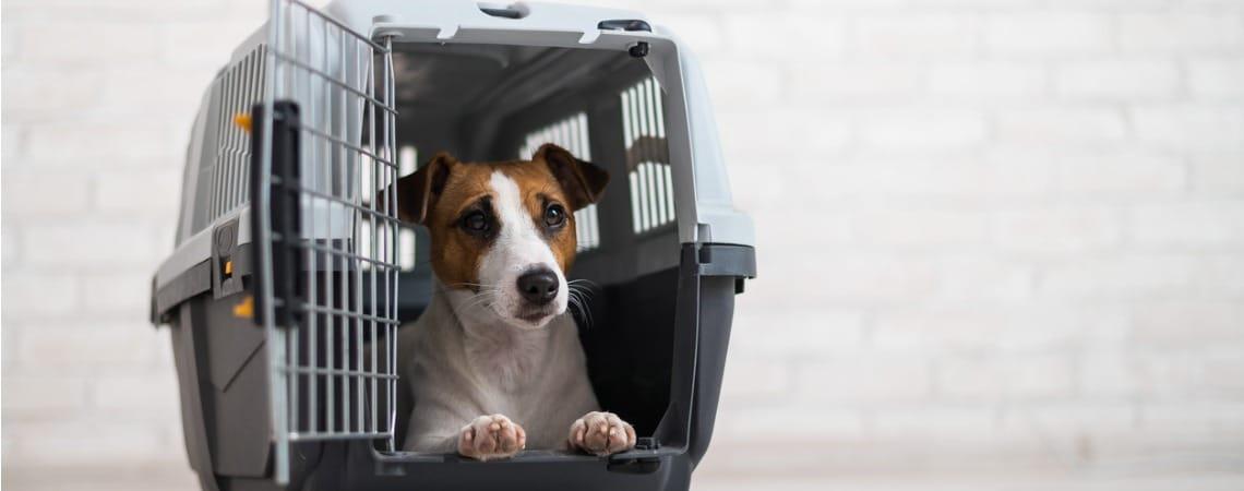 transport du chien