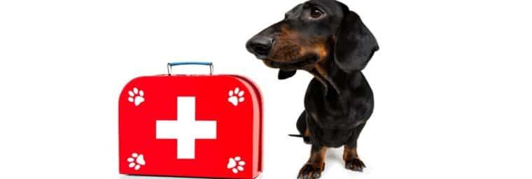 urgences vétérinaires en clinique