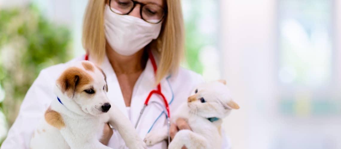 vétérinaire comportementaliste