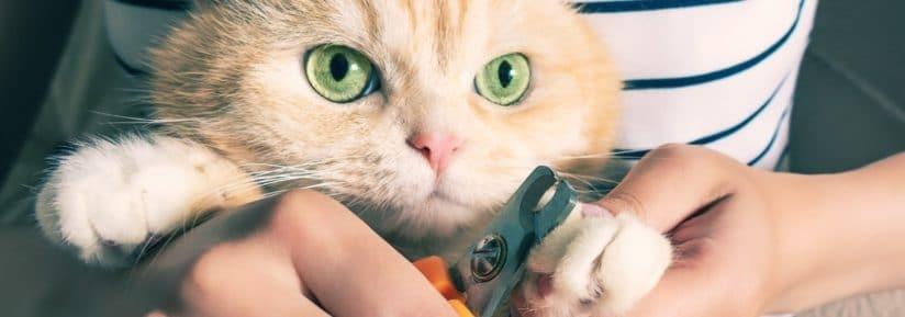 vétérinaire couper griffes chat