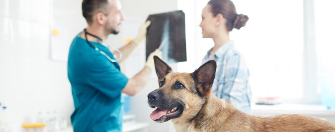 vétérinaire avec radiographie de chien