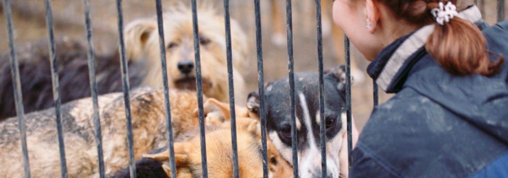 garderie pour chien